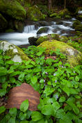Big Creek in the Smokies, an Ode to Eliot Porter