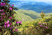Rhododendrons and Wispily-clouded Mountains