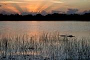 Everglades Morn.