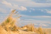 Dune-Scape, Jockey's Ridge