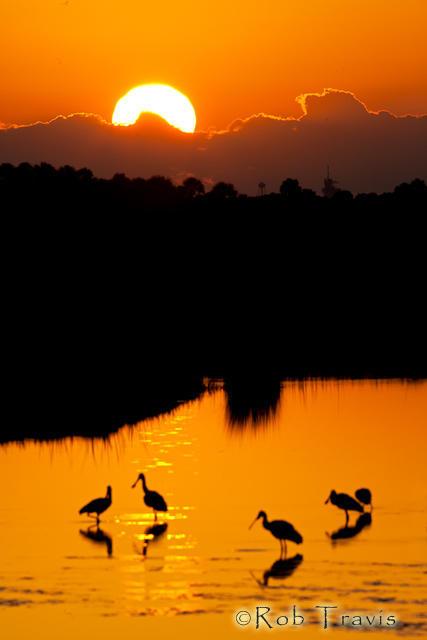 Bird Silhouettes at Sunrise