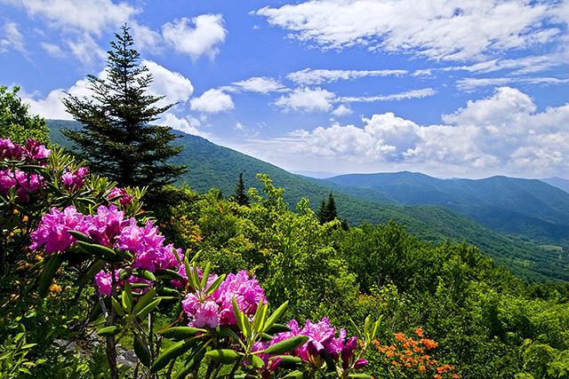 Roan Mountain in June