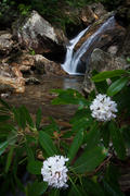 Upper Skinny Dip Falls with Rhododendron
