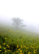 High Meadow in Fogy