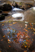 Reflections in a Puddle, Jones Gap State Park