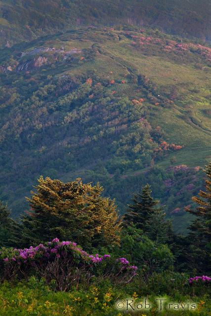 Appalachian Trail on Jane Bald