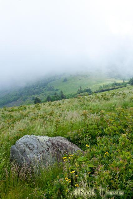 Field Boulder in high grasses