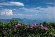 Blue Sky Vista