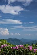 Blue Sky Vista (V)