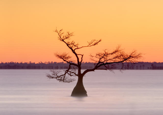 Cypress at Lake Mattamuskeet, OBX