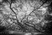 Tree as Subject