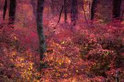 Dancing Trees in Burning Bush