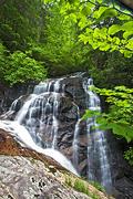 Batson Creek Falls through Trees