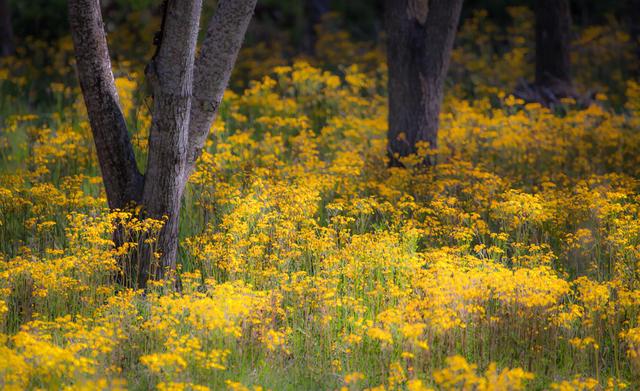 Trees Dancing in Flowers