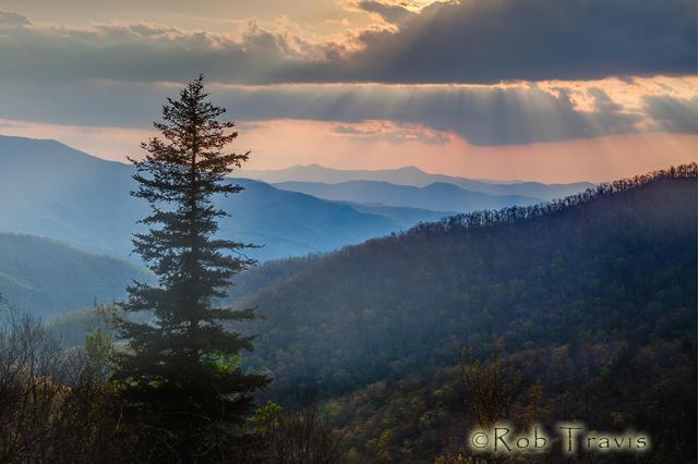Pine, Blue Ridge Parkway