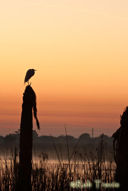 Great Heron silhouetted against the morning sky.