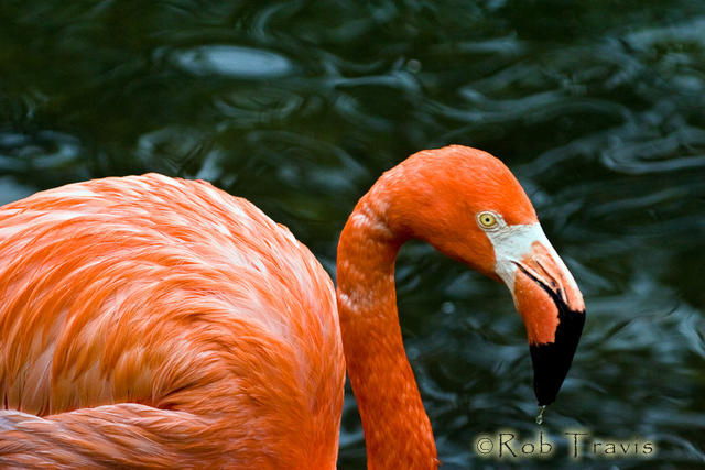 Flamingo. I really just loved this background.