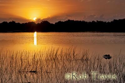 Mosquito Point Sunrise, Everglades.