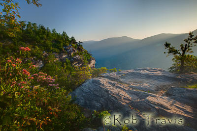 Mountain Laurel in Linville Gorge.