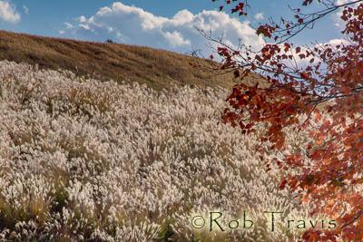 Grassland in NC.