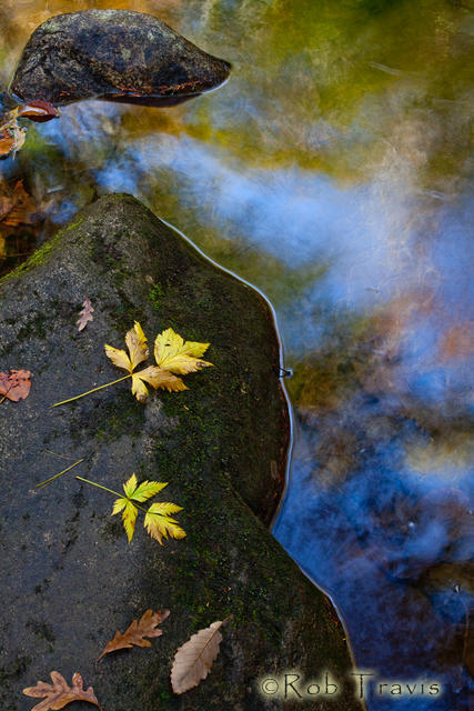 Autumn Leaves and Colored Water.