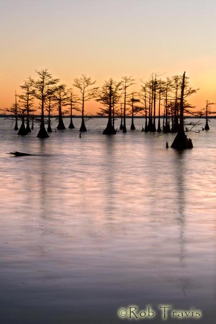 Cypress Grove at Sunset Lake Mattamuskeet, OBX, NC