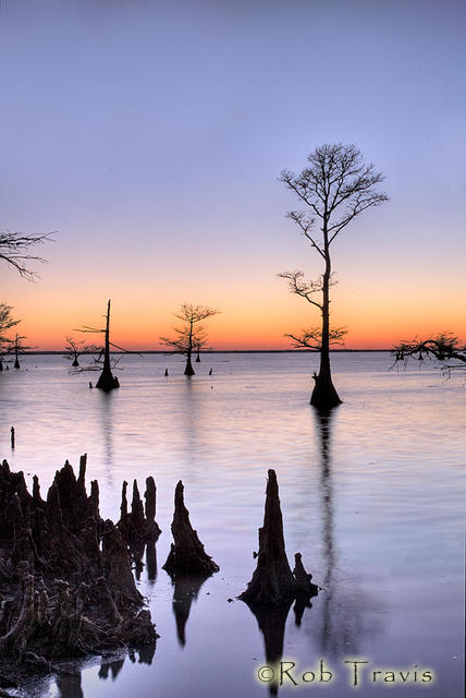 Lone Cypress at Sunset Lake Mattamuskeet, OBX, NC