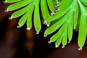 Micro Drops on Macro Leaves