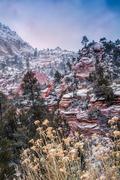 Snowy Zion