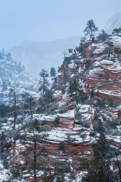 Snowy Zion ll