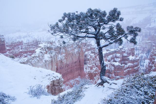 Snowy Bryce Canyon