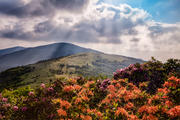 Roan Mountain Afternoon