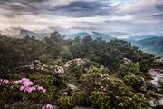 Cloudy Morn on Hawkbill Mountain