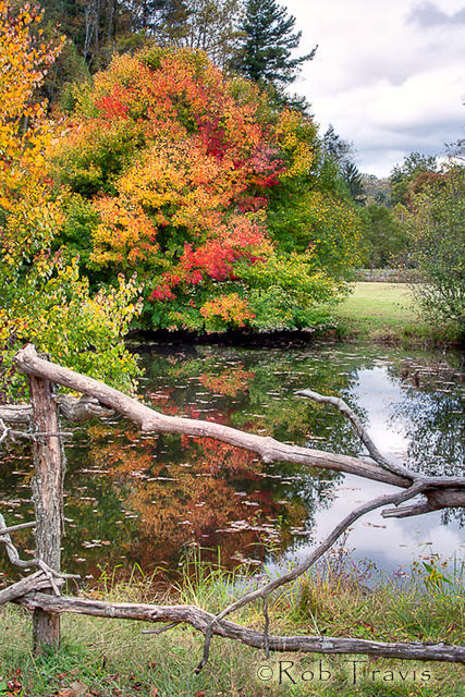 Down at the Pond in October