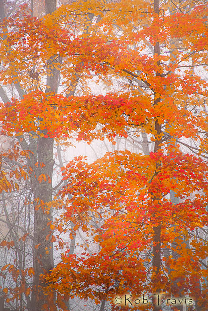 Autumn Tresses, Cedar Mountain, NC