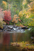 On the banks of the Little River, DuPont State Forest