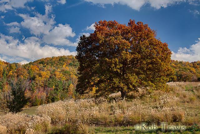 Autumn Field in Barnardsville, NC
