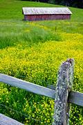 Red Barn, Yellow Flowers