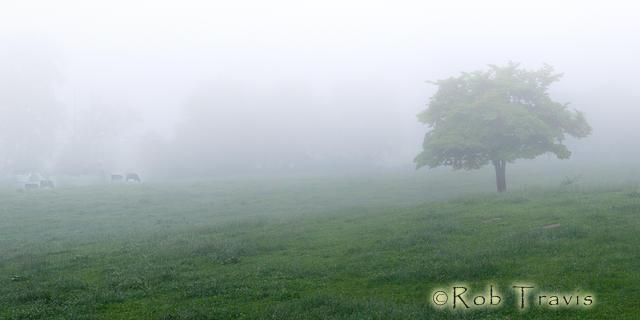 Misty Morn on the Farm