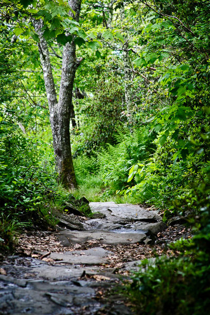 The Path Down, Mount Pisgah, Blue Ridge Parkway