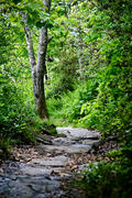 The Path Down, Mount Pisgah, Blue Ridge Parkway