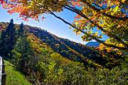 Autumn near Mt Mitchell