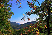 Autumn View from Glass Feather