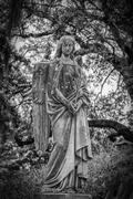 Magnolia Cemetery. Broken wing...